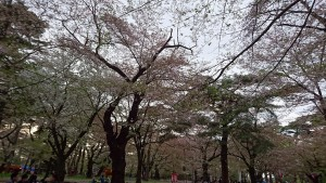 oomiyakouen