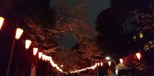uenosakura2016